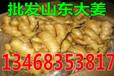 儋州大姜价格行情