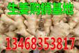 丰镇2016大姜价格预测