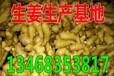 琼山大姜种植基地