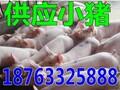 淮南预测猪价走势行情图片