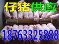 海西现在最近几年猪肉价格行情图片