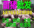 汉中猪仔交易市场图片