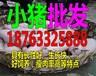 江西吉安猪苗的价格多钱一斤