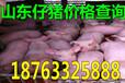福建厦门小猪的价格多钱一斤