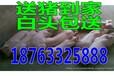 上海2017年4月猪价会上涨吗猪崽贵州大型养猪场