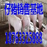 安徽淮北15公斤苗猪价格是多少图片