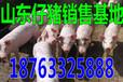 广西北海15公斤小猪价格是多少