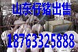 青海玉米价格最新行情辽宁今日仔猪价格行情预测