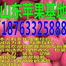 浙江舟山烟台苹果最新价格行市