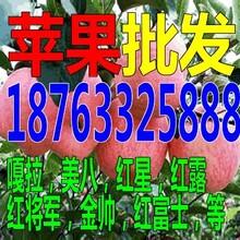 湖南常德红肉苹果多少钱一斤