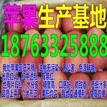山东苹果多少钱一斤图片