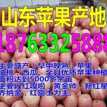 湖北襄阳烟台苹果