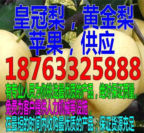 佳木斯皇冠梨批发多钱一斤