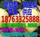 徐州嘎拉苹果销售价格