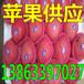 塔城红富士苹果价格多少钱一斤