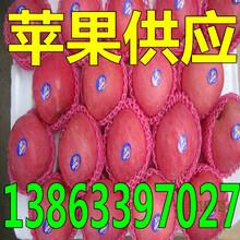 临沧黄金梨/黄皇冠梨多少钱一斤图片
