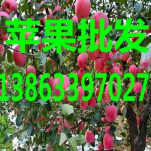 海南冷库黄金梨/黄皇冠梨价格图片