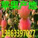 陕西今日红富士苹果价格行情