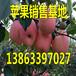 临汾嘎啦苹果卖多少钱一斤