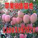 临沧黄金梨/黄皇冠梨市价多少钱一斤