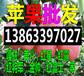 四平今日红富士苹果价格