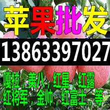 九江现在黄金梨/黄皇冠梨一斤多少钱图片
