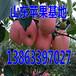 内江金帅苹果生产基地
