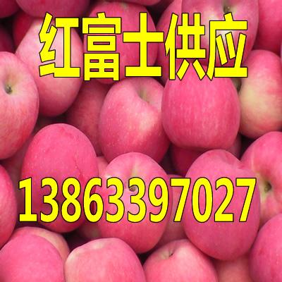 巴音郭楞红富士苹果批发市场报价