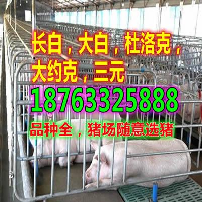 四川巴中小猪仔最新价格