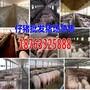 甘肃甘南州2017猪仔价格行情预测图片