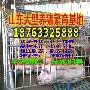 广东惠州今天猪仔价格行情图片