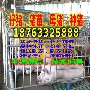 重庆璧山县2017年猪仔价格图片