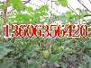 个人代收各种瓜果蔬菜价格0635-755168