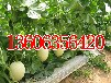 山东聊城莘县蔬菜代收厂家专业代收各种优质新鲜蔬菜瓜果