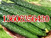 瓜果类蔬菜甜瓜黄瓜冬瓜西红柿圣女果代收