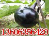 山东瓜果类蔬菜代收厂家-鲁西瓜果蔬菜交易市场