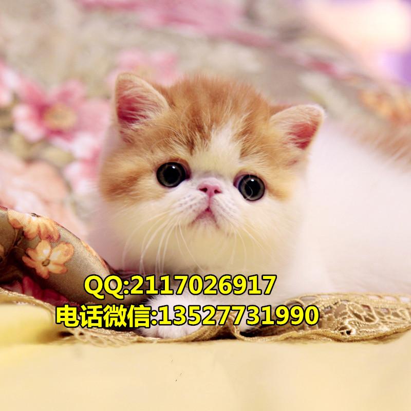 橡皮泥手工制作动物加菲猫