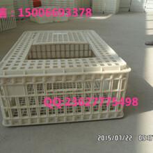 大鸡运输筐批发山鸡运输笼生产厂家兔子运输笼