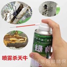 烟台牟平蛤虫药代理价格烟台蛤虫药厂家图片