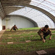 衡水日光温室建造蔬菜大棚建设供应商