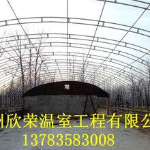 安阳养猪大棚建造施工养殖大棚建造厂家