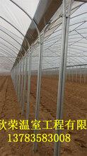 安阳简易连体棚建造基地葡萄大棚建设标准