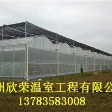 承德香菇大棚建造技术薄膜连栋温室建造费用