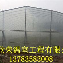 唐山塑料简易拱棚有几种搭建方法价格是多少