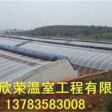 几字钢温室建造价格马鞍山樱桃大棚建设规格