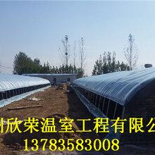 沧州日光温室蛋鸡养殖大棚专业建设