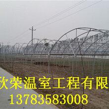 合肥几字钢温室专业建造团队花卉大棚建造设计
