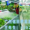 蔬菜保鮮設備