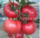 知名的抗TY病毒西红柿种子_粉特2号进口西红柿种子