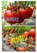 请让晨宏上热搜!河北西红柿种子厂家(西红柿种子价格)